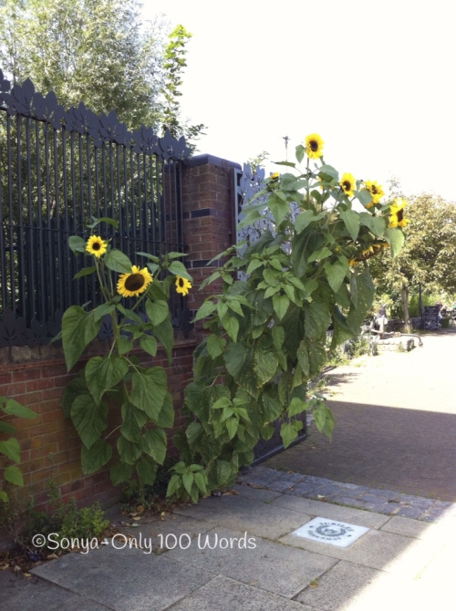untitledsunflower