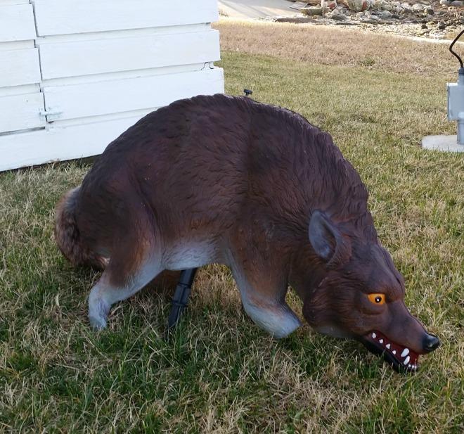 oddballwolf