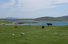 220px-Berneray_Machair
