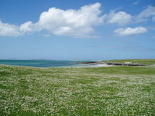 220px-Berneray_Machair_(hazelisles)
